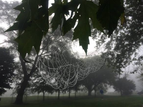 Spider web South Shore 8-23-14