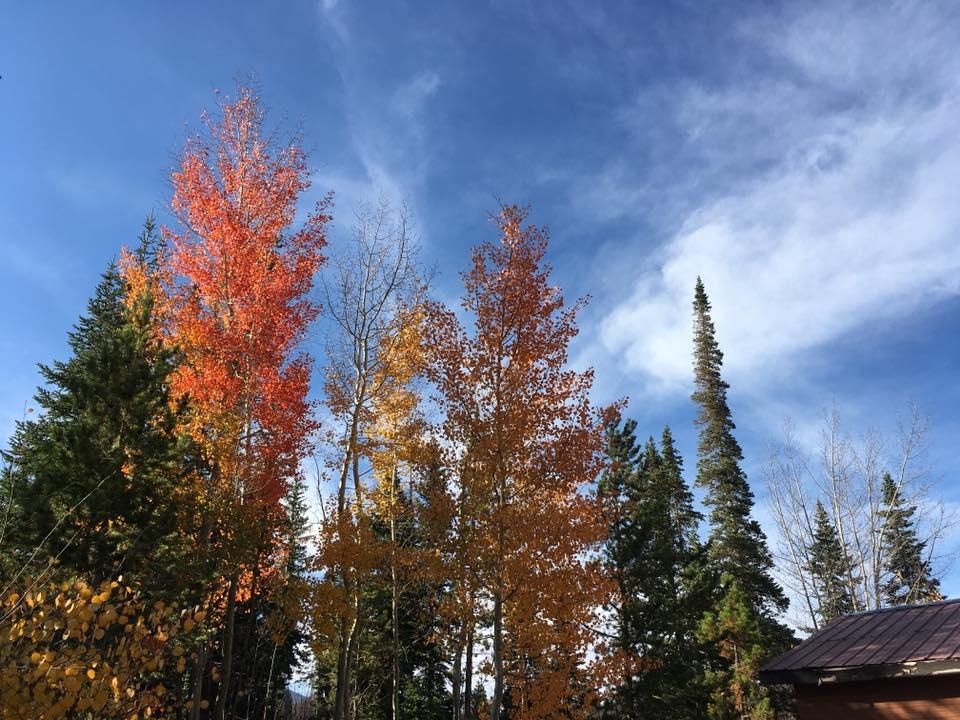 CO fall 2018